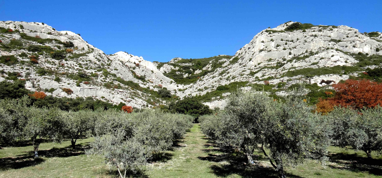 Un p lerin au jardin des oliviers le 30 octobre for Au jardin des oliviers